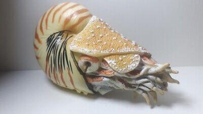 2020 NEW Collecta Dinosaur Toy / Figure Nautilus pompilius