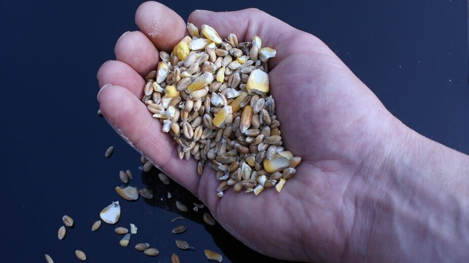 Hen Feed Buying Guide