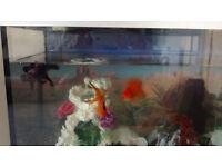 Fish and fish tank