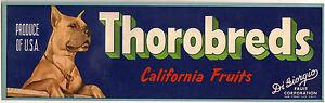 Original-THOROBREDS-DiGiorgio-BOXER-DOG-San-Francisco-Fruit-Label-NOT-A-COPY
