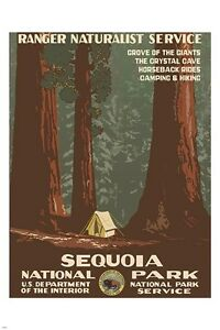 SEQUOIA NATIONAL PARK vintage nature poster 1938 RANGER NATURALIST 24X36 new