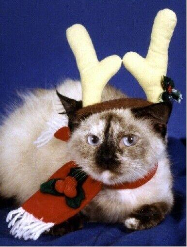 Pet Christmas Cards:Cat Reindeer