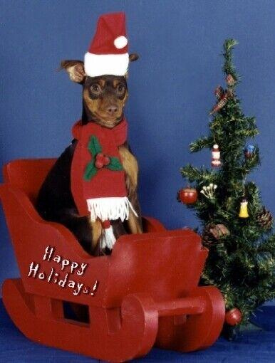 Pet Christmas Cards:Dog Mini Pinscher