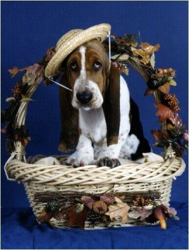 Pet Notecards Dog Bassett Hound Basket