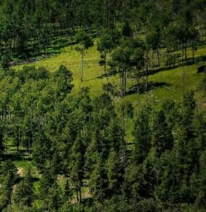 Vacant land for lease for your mobile home and  your horse