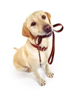Dog Walker Available in Ancaster