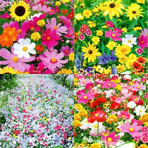 8 Kinds Wildflowers Seeds Flowers Seeds Blooming Elegant