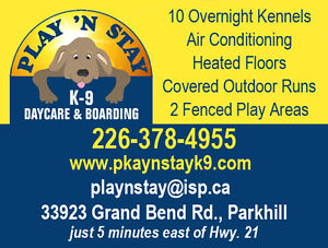 Dog Boarding Kennel and Daycare