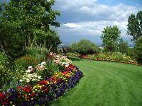 Gardener !!! Garden Service !!! Borehamwood,Edgware,Radlett,Barnet and More...
