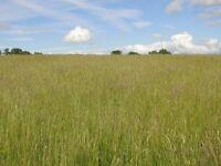 Grazing land - 7 acres