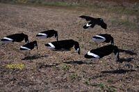 Sillosocks Tim Grounds Magnum goose decoys Dozen