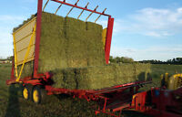 HAY FOR SALE - SMALL SQUARE BALES