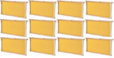 Summerhawk Ranch Frame Bees 9 58 Deep Frame And Foundation 12-pack