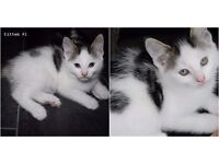 3 beautiful kittens looking for a lovely home!