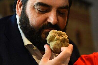 Precious fresh white truffle. Mushrooms,from Italy (T.Albidum Pico) 230g.8,2oz