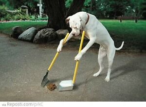 Pet Waste Cleanup and Removal!! Call of Doodie