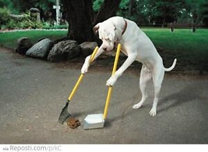 Pet Waste Cleanup and Removal!! Call Us