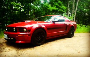 2007 mustang gt California special low kms