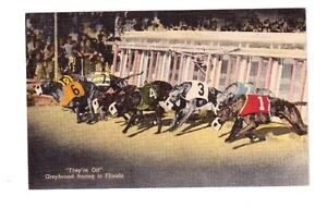 carte postale Course de chien greyhound en Floride.