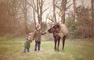 Reindeer Sessions