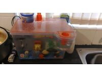 2 baby shubunkin & spongebob tank
