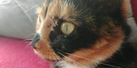 Lovely green eyes female cat
