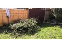 Garden waste collection needed