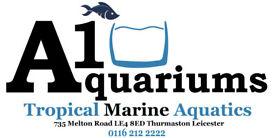 Marine tropical fishes fishtank aquariums Leicester