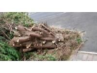 Free tree stump