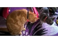 male cat 2yeara old and female cat 3 years old need a loving home preferably together