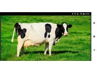 Farm work/relief milkers