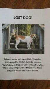 OVLPN - Lost dog in the Ompah area