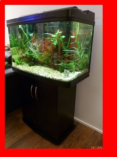 fish pod curved glass aquarium fish tank 120 litre cabinet lid light in liverpool merseyside. Black Bedroom Furniture Sets. Home Design Ideas