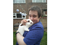 URGENT Two rabbits (male, neutered, healthy, 2yr) to rehome
