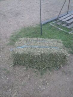 lucerne hay delivered $ 17 a bale  Woodberry Maitland Area Preview