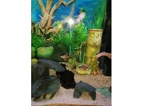 120 litre Juwel Fish tank and cabinet, with pump and air stone, led lights, and fish