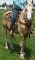 7 yr old stunning palomino quarter horse for quick sale
