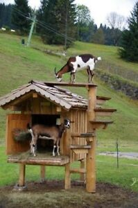 Wanted! Goats/animals to forever pet homes
