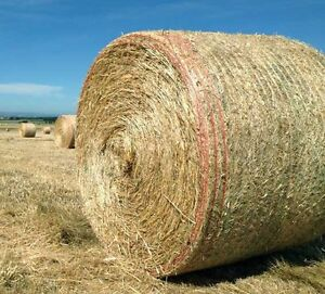 Hay for sale large rounds Surf Coast Preview