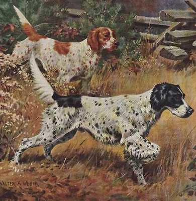 English Setter - Vintage Color Dog Print - MATTED