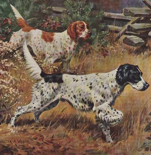 English Setter - Vintage Color Dog Print - MATTED