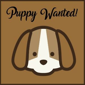 Puppy Wanted