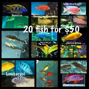 (Pack 1) 20 fish for $50