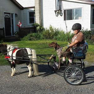 Custom Miniature Horse Cart