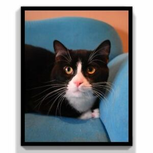 FIXED, FRIENDLY CATS @ Small Things --  $160 to $60