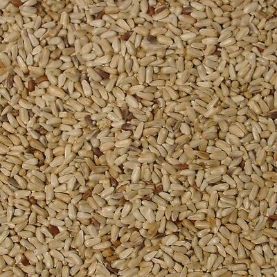 Morning Bird Safflower Seed (20 lb)
