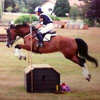 Equestrian Coach/Trainer