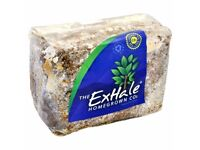 Hydroponics The Exhale Co2 HomeGrown - Tent Growing Equipment