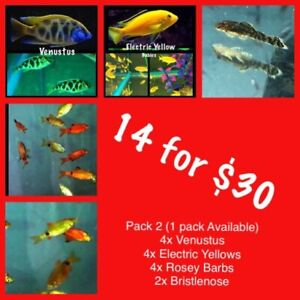 Pack 2 14 for $30