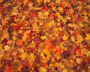 Fall clean up and leaf removal services Kingston Kingston Area image 5